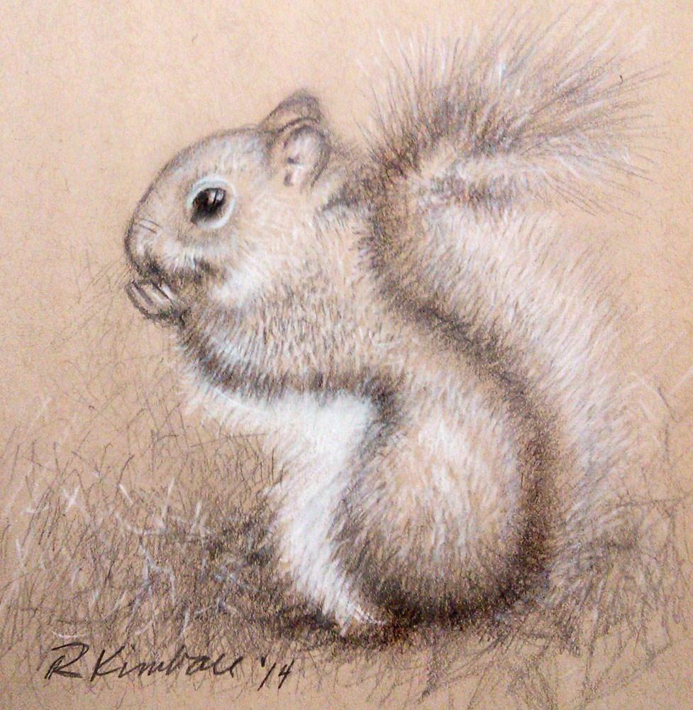 """Little Squirrel"" original fine art by Bob Kimball"