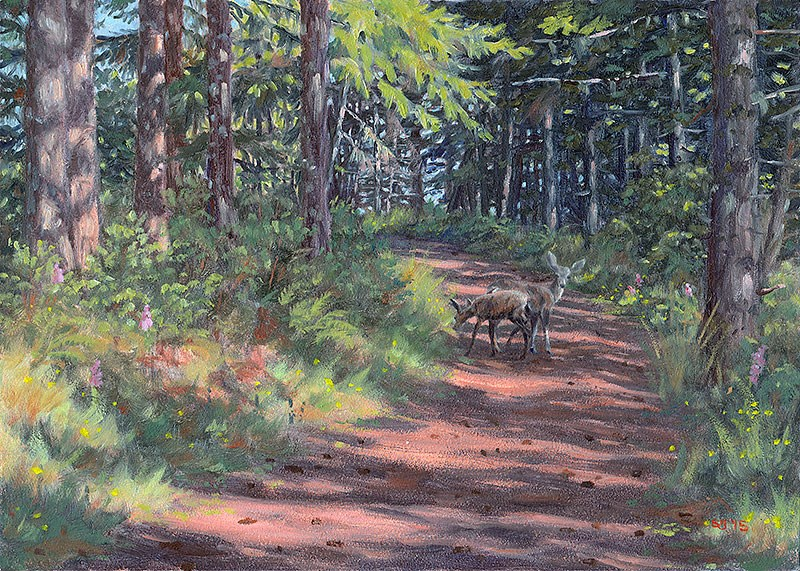 """C1598 Forest Road in the Coast Range (Oregon)"" original fine art by Steven Thor Johanneson"