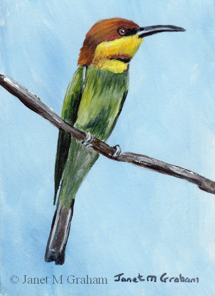 """Chestnut Headed Bee-Eater ACEO"" original fine art by Janet Graham"