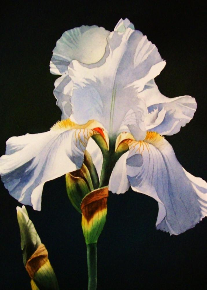 """White Iris"" original fine art by Jacqueline Gnott, whs"