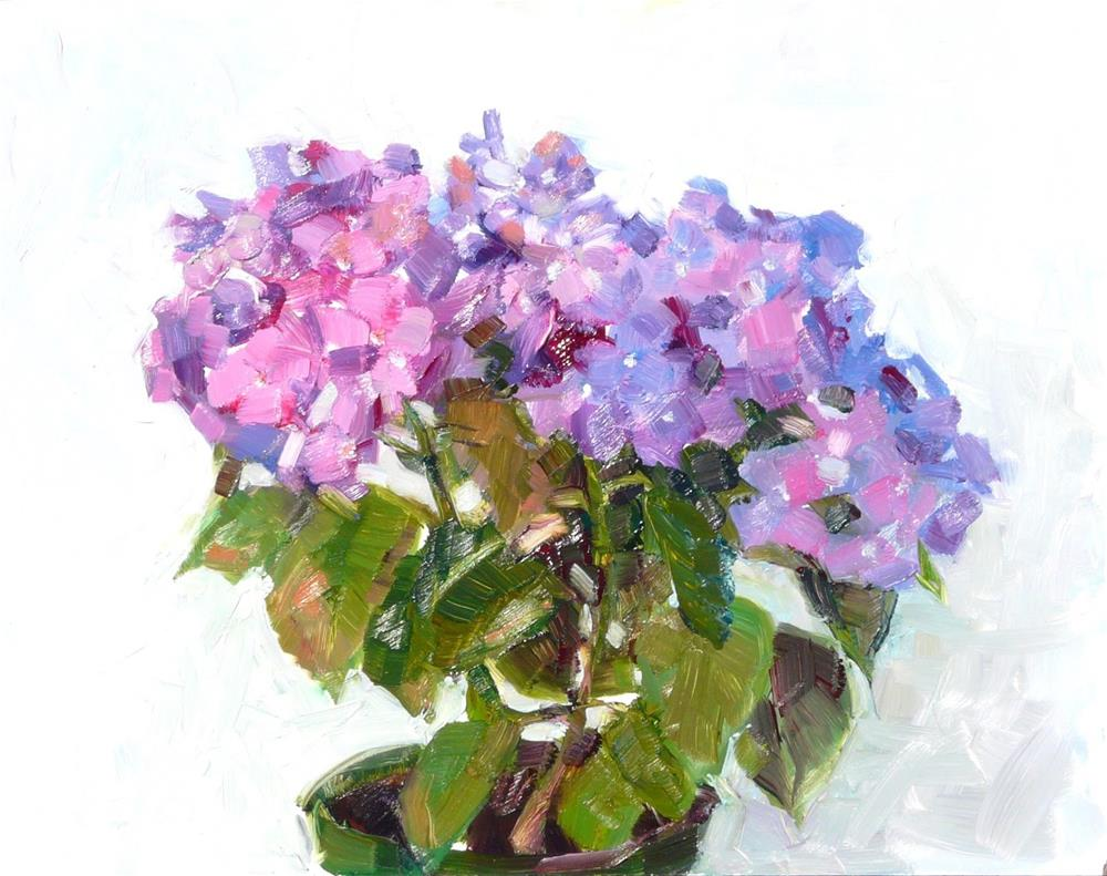 """Hydrangea Plant,still life,oil on panel,11x14price$400"" original fine art by Joy Olney"
