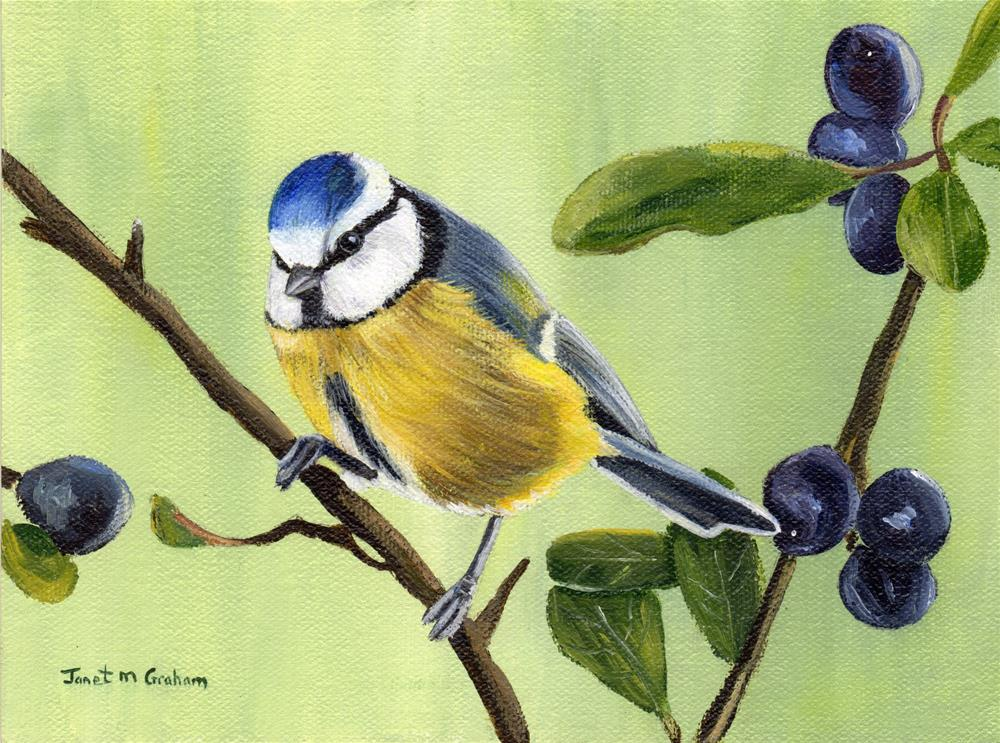 """Blue Tit"" original fine art by Janet Graham"