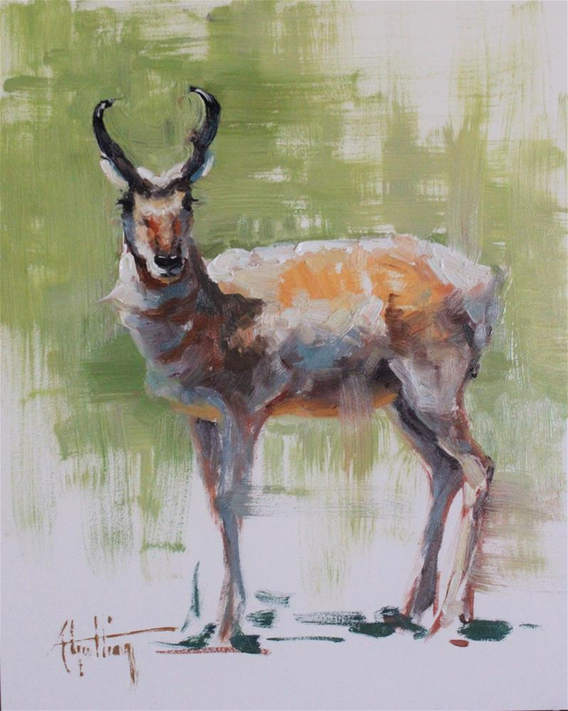 """Antelope Study #1"" original fine art by Abigail Gutting"