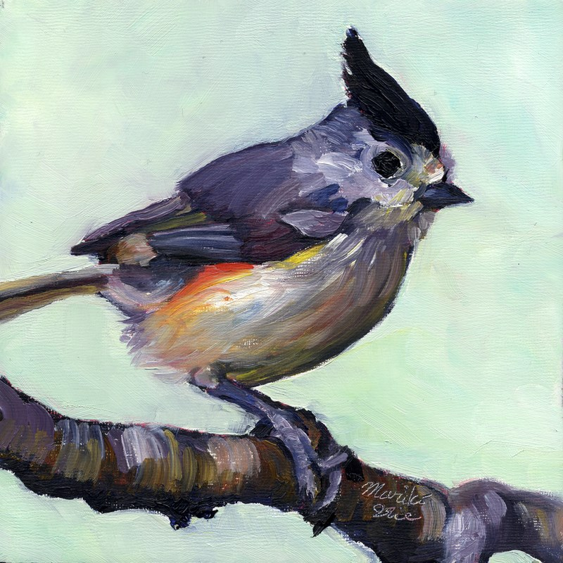 """Black-crested Titmouse"" original fine art by Mariko Irie"