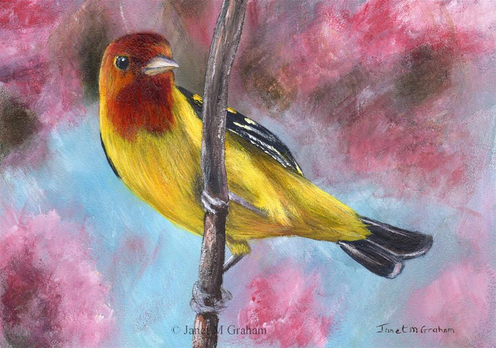 """Western Tanager"" original fine art by Janet Graham"