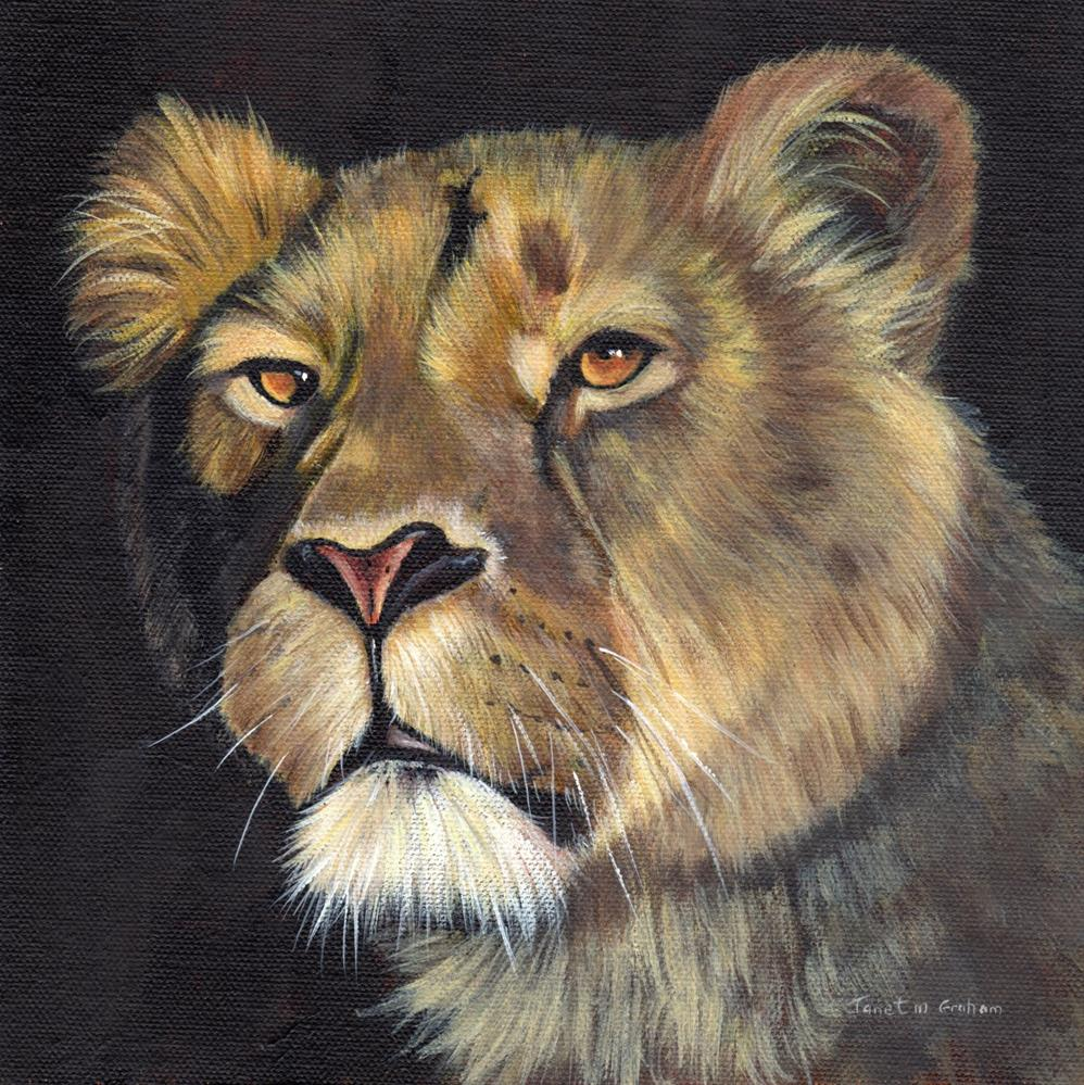 """Lioness 2"" original fine art by Janet Graham"