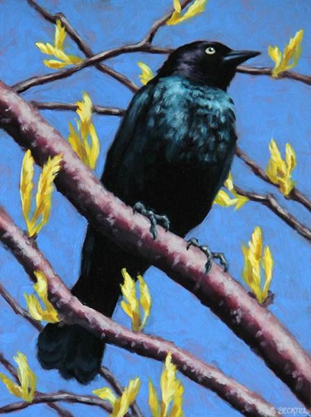"""""""Brewer's Blackbird"""" original fine art by Sarah Becktel"""