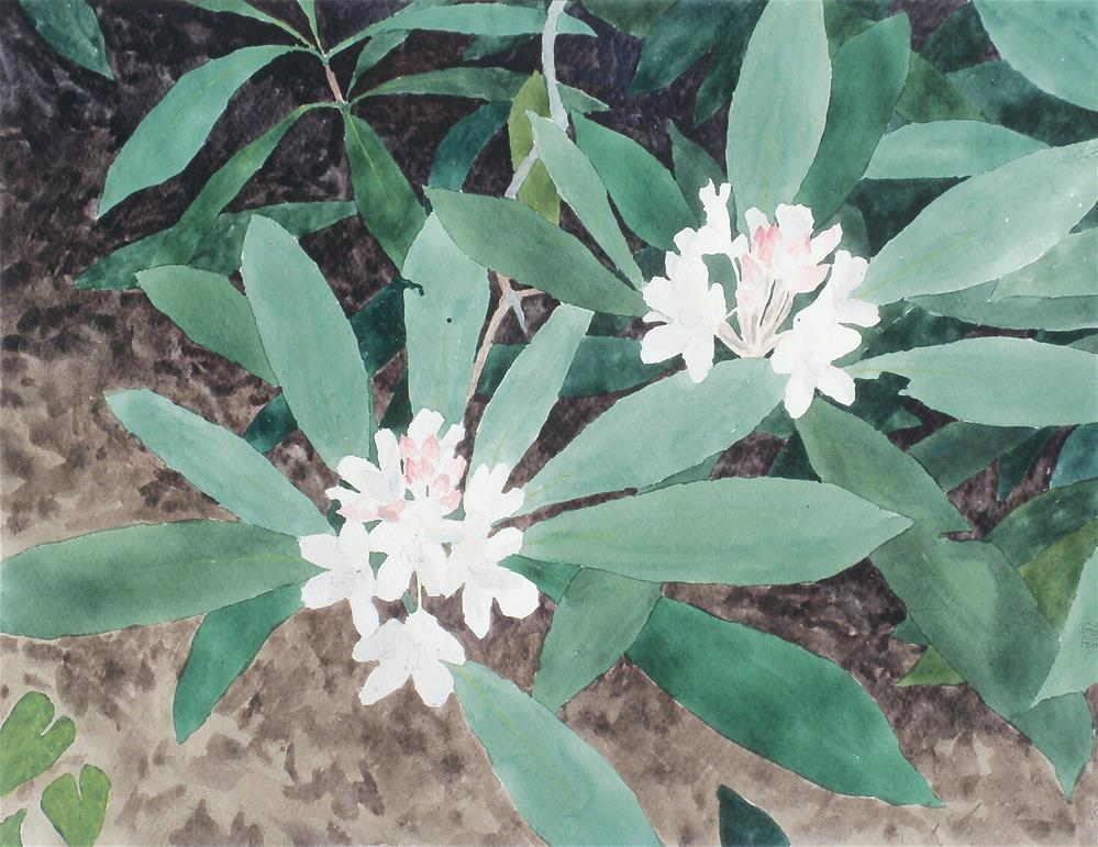 """Rhododendron Blooming"" original fine art by Greg Arens"