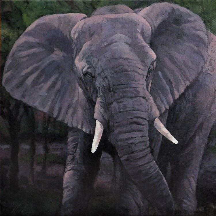 """Elephant Emerging"" original fine art by Shawn Shea"