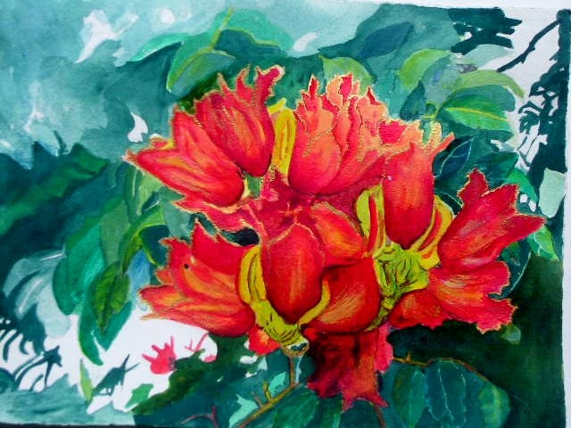"""African tulip tree"" original fine art by Elizabeth Current"