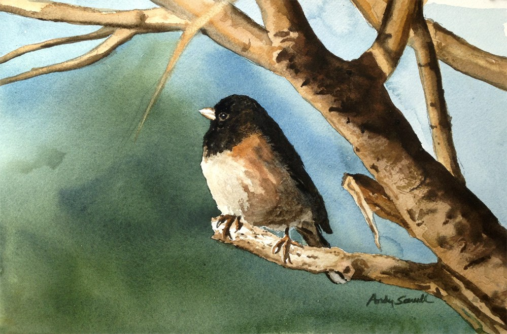 """J is for Junco"" original fine art by Andy Sewell"