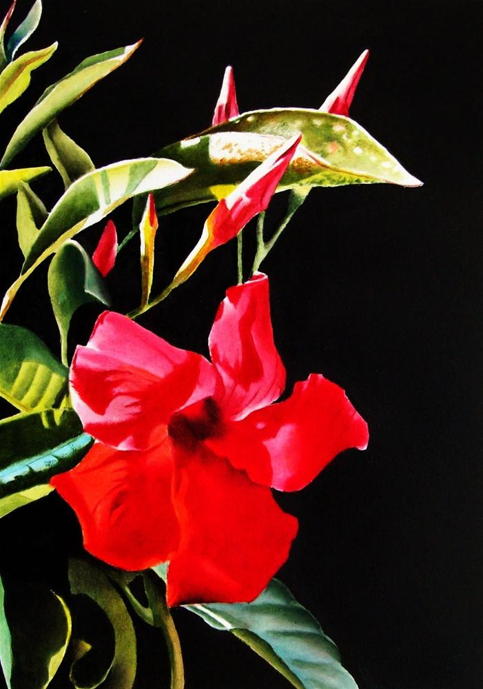 """Red Mandevilla"" original fine art by Jacqueline Gnott, whs"