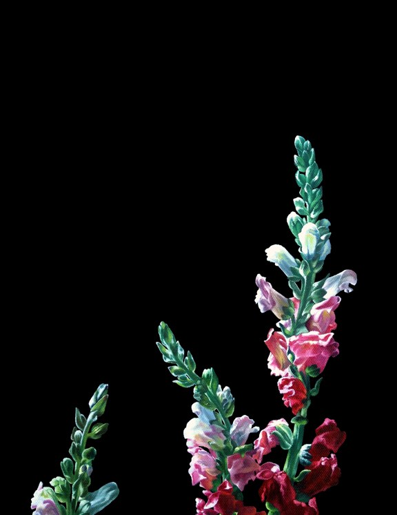 """Snapdragons I"" original fine art by Jelaine Faunce"