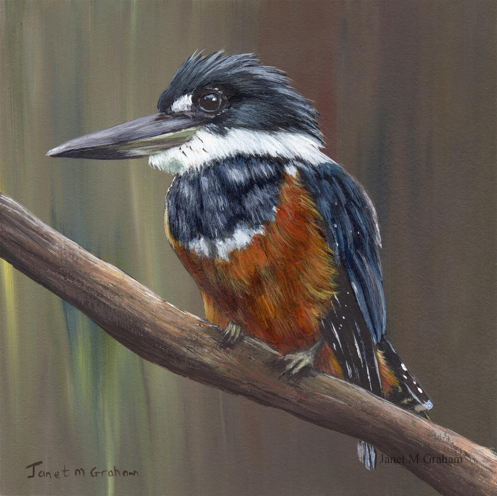 """Ringed Kingfisher"" original fine art by Janet Graham"