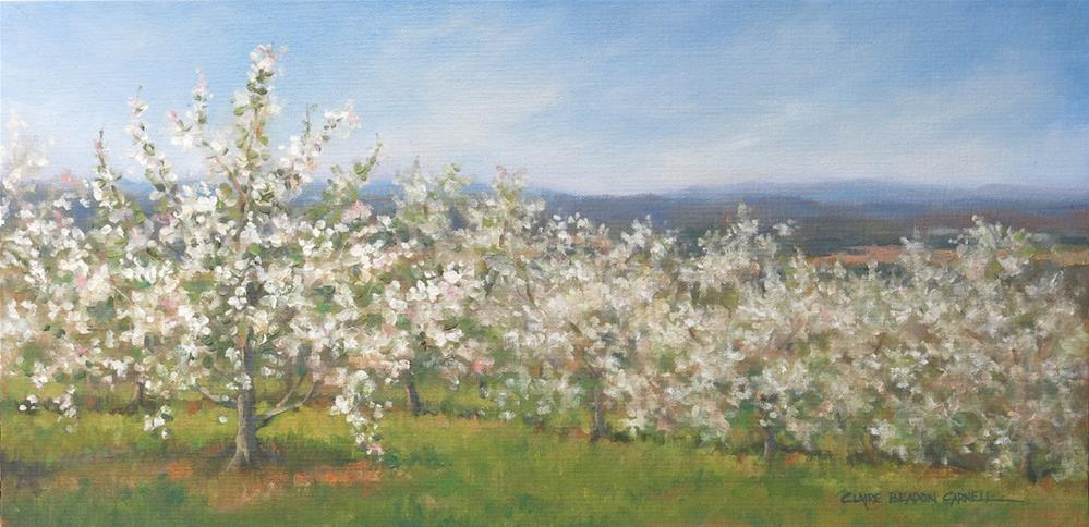 """APPLE TREES ON THE HILL An Original Oil Painting by Claire Beadon Carnell"" original fine art by Claire Beadon Carnell"
