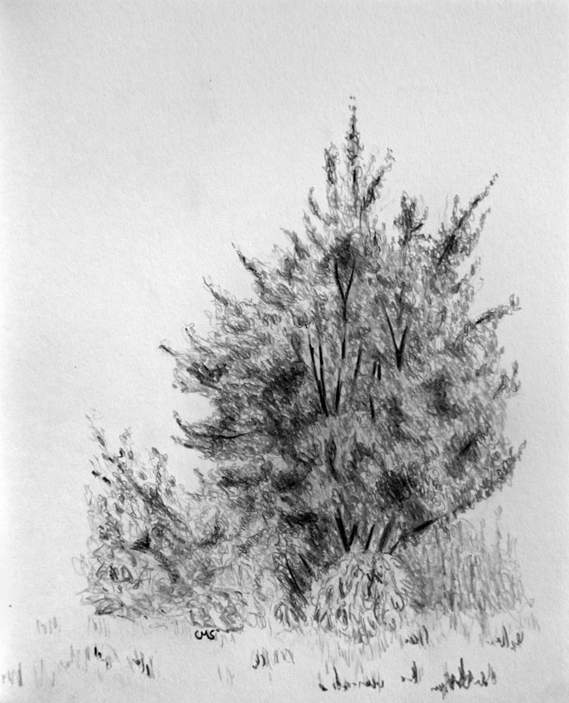 """""""In Front of the Bush"""" original fine art by Ulrike Miesen-Schuermann"""