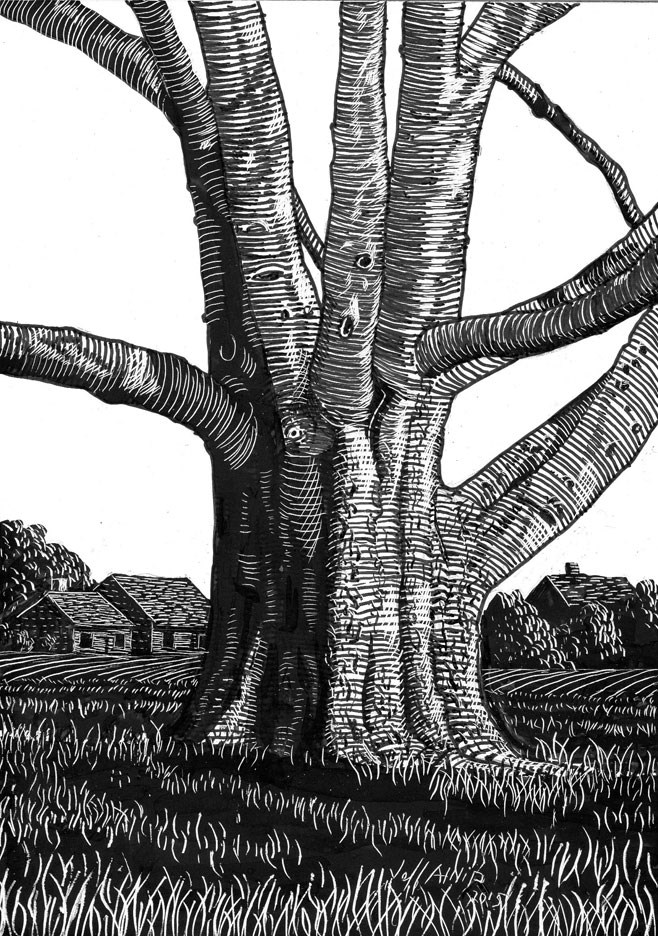 """""""Hackberry In The Field"""" original fine art by Jeff Atnip"""