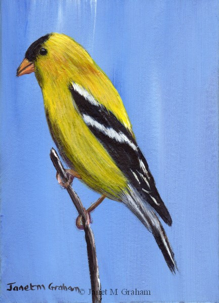 """American Goldfinch ACEO"" original fine art by Janet Graham"