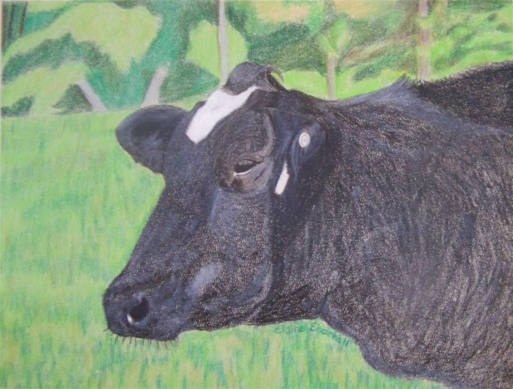 """How Now Black Cow?"" original fine art by Elaine Shortall"