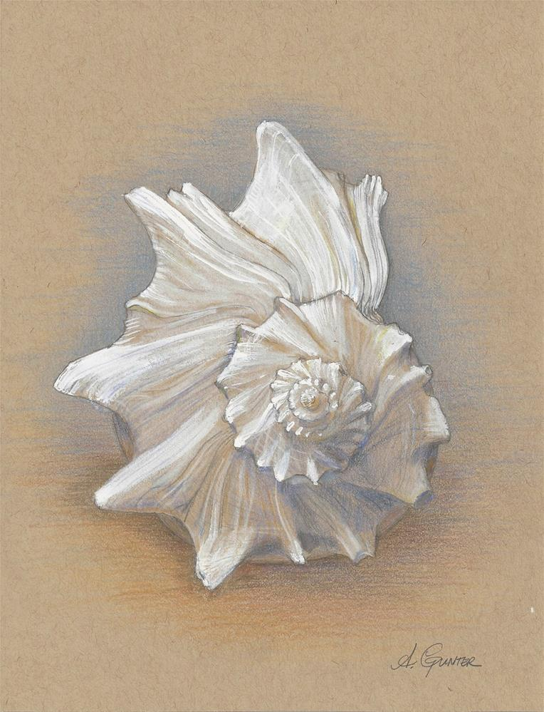 """Whelk Seashell, Emerald Isle, North Carolina"" original fine art by Angela Gunter"
