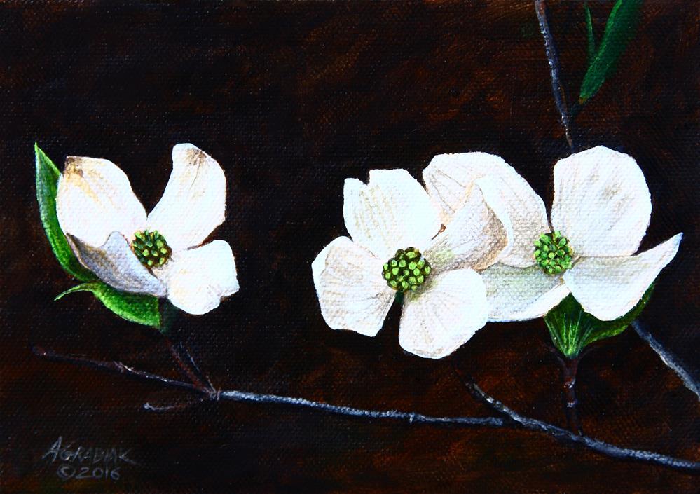 """American Dogwood study"" original fine art by Aaron Grabiak"