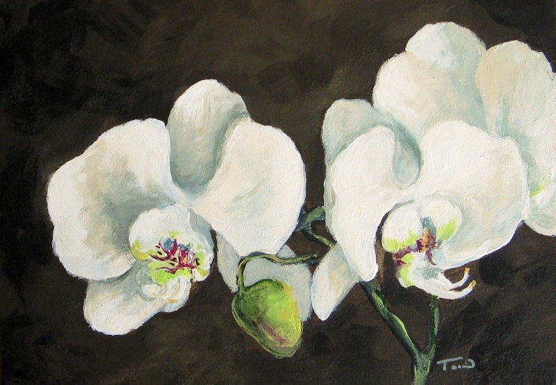 """My Orchid"" original fine art by Torrie Smiley"