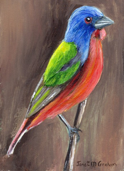 """Painted Bunting ACEO"" original fine art by Janet Graham"
