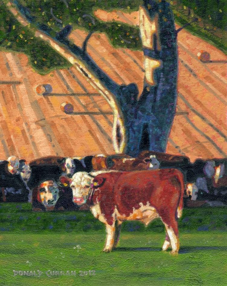"""""""Cows, Moooo!"""" original fine art by Donald Curran"""