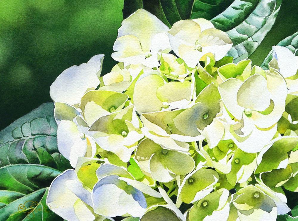"""Hydrangea"" original fine art by Jacqueline Gnott, TWSA, WHS"