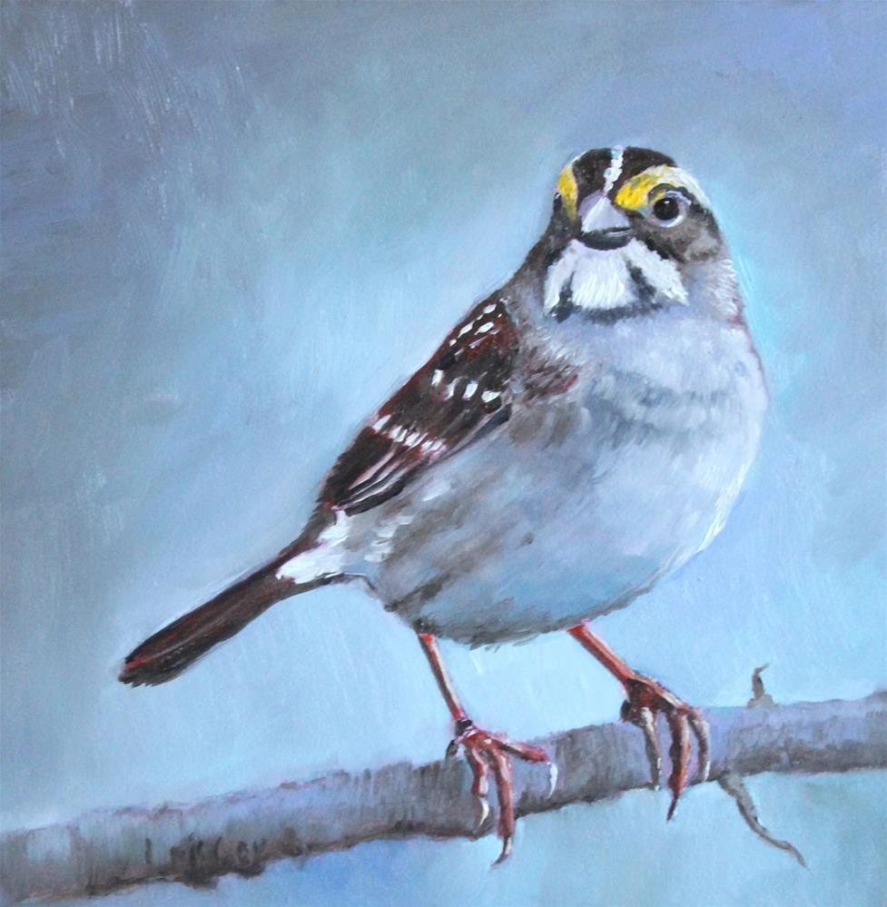 """White Throated Sparrow"" original fine art by Linda McCoy"