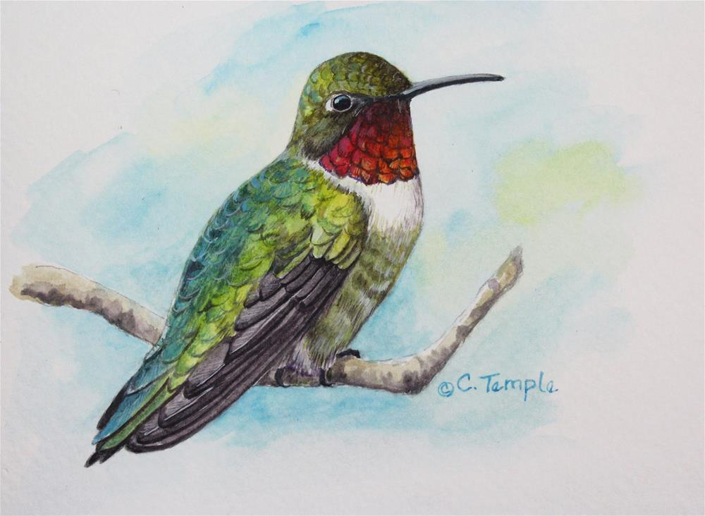 """Ruby-throated Hummingbird"" original fine art by Catherine Temple"