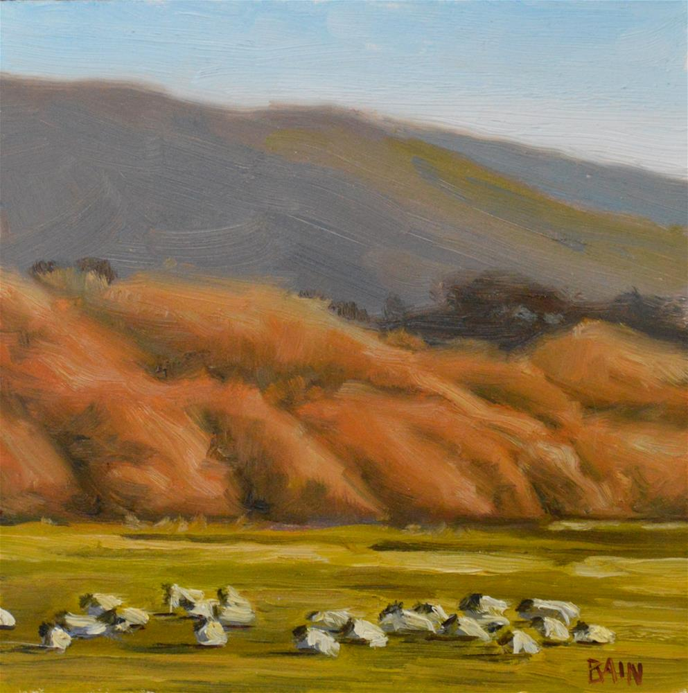 """Sheep at  Sunset, Carmel"" original fine art by Peter Bain"