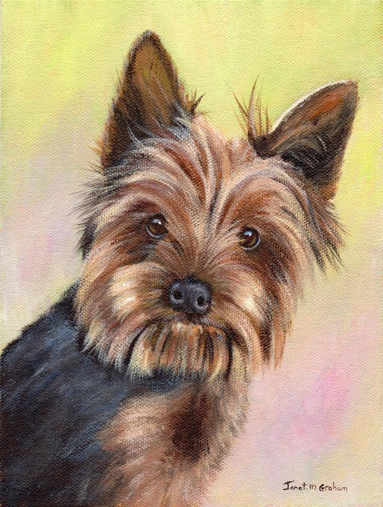 """Yorkshire Terrier"" original fine art by Janet Graham"