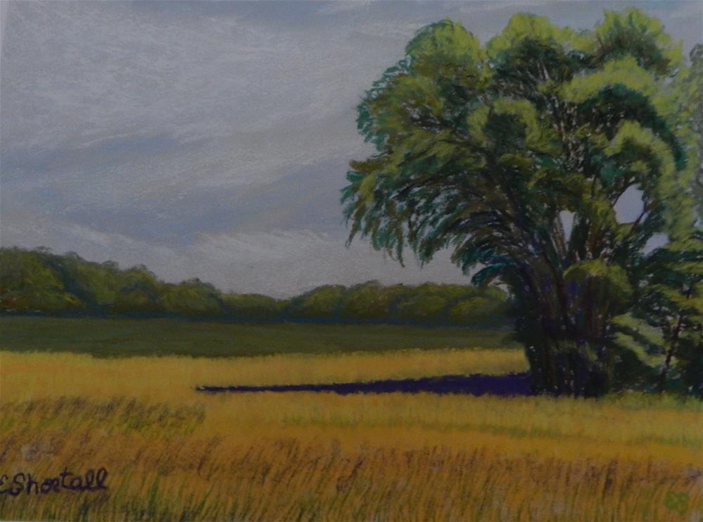 """""""Shade on Buttercups"""" original fine art by Elaine Shortall"""