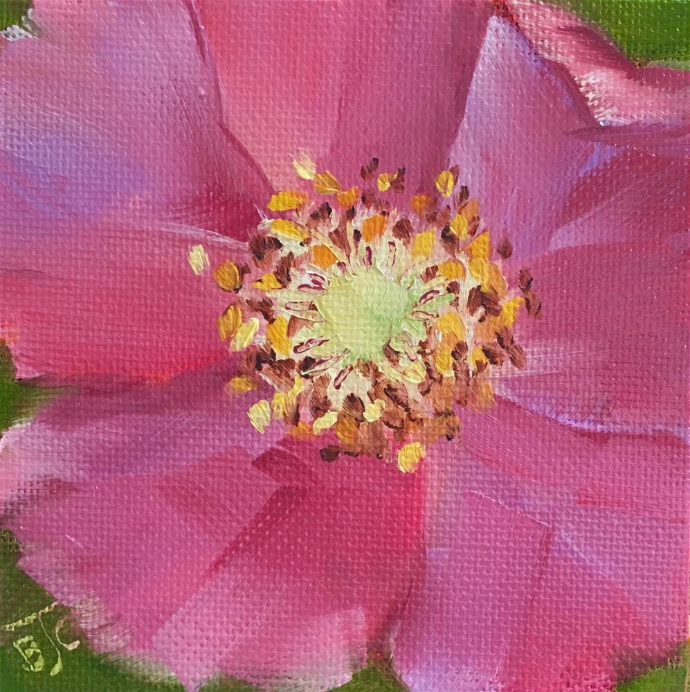 """Wild Rose"" original fine art by Bobbie Cook"