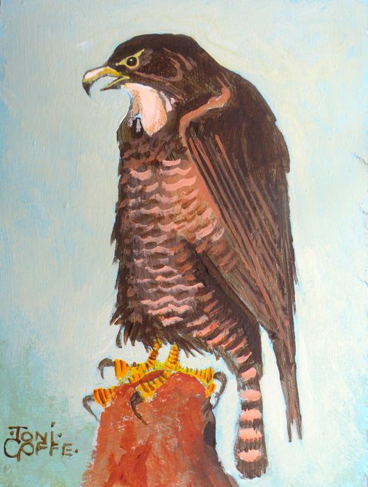 """Buzzard"" original fine art by Toni Goffe"