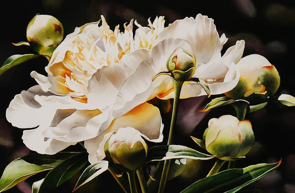 """White Peony with Buds"" original fine art by Jacqueline Gnott, whs"