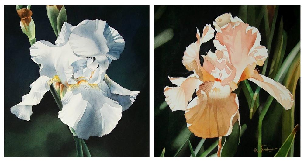 """White & Peach Irises"" original fine art by Jacqueline Gnott, TWSA, WHS"