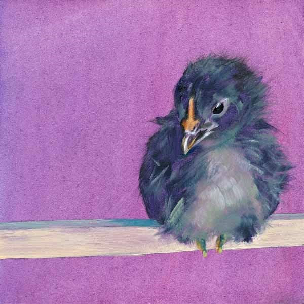 """Just Fluff"" original fine art by Brenda Ferguson"