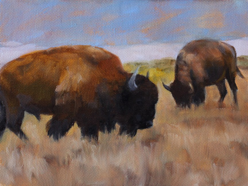 """Bison by the Dunes"" original fine art by Pamela Poll"