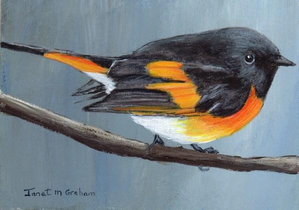 """American Redstart ACEO"" original fine art by Janet Graham"