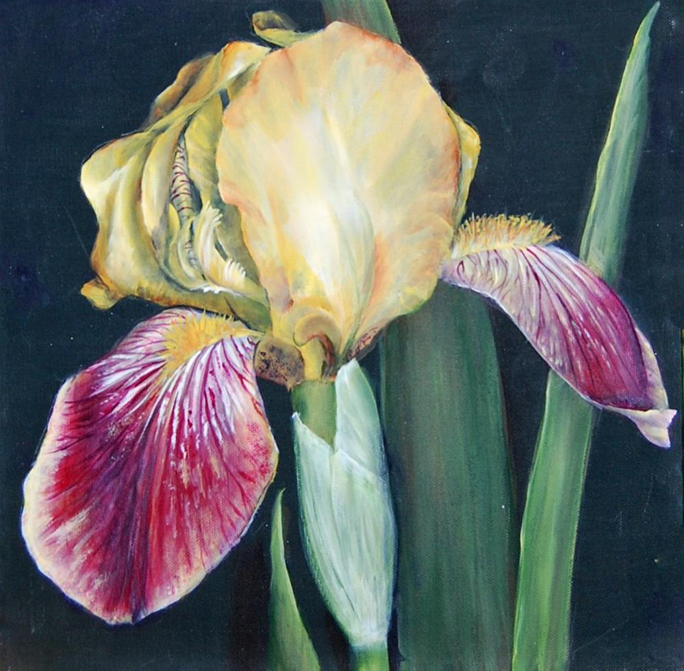 """Iris "" original fine art by Maureen Baker"