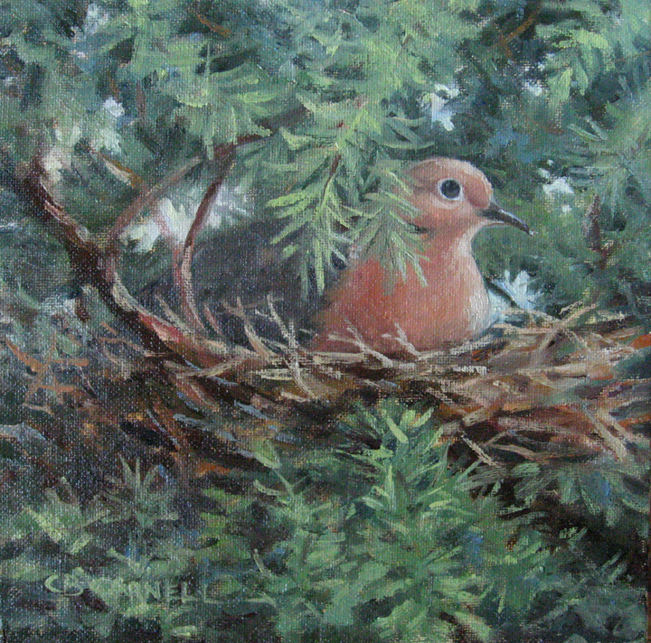 """""""Nesting - 100 Paintings in 100 Days Challenge 'Inspirations from a Back Yard'15/100"""" original fine art by Claire Beadon Carnell"""