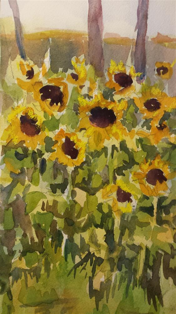 """Frescati Sunflowers"" original fine art by angela scully"