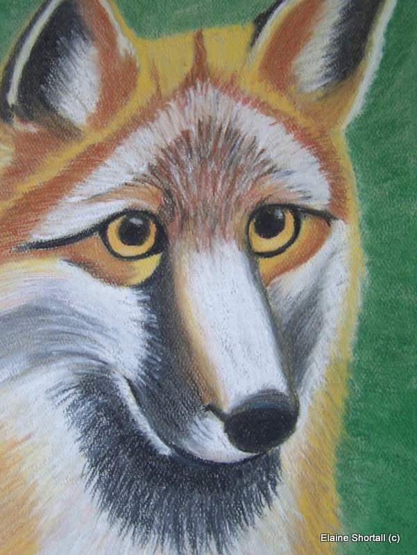 """What Does the Fox Say?"" original fine art by Elaine Shortall"