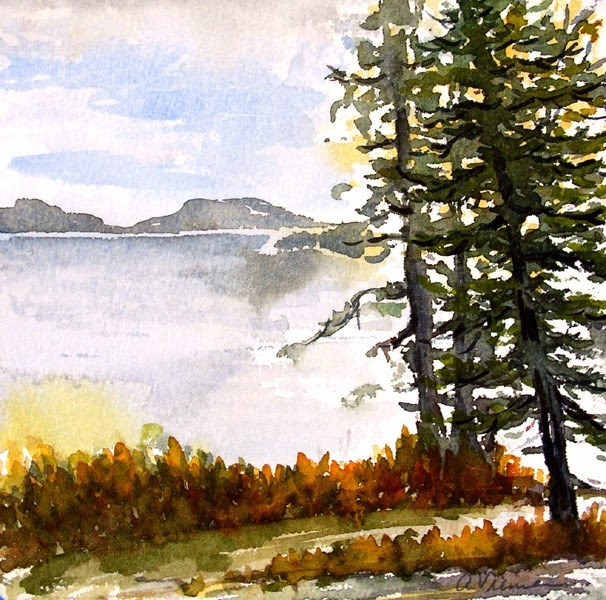 """Maine Spruce"" original fine art by Anna Vreman"