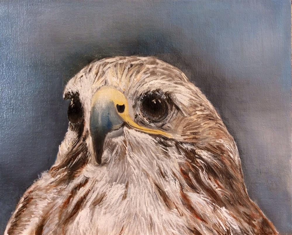 """""""Red Tailed Hawk"""" original fine art by Charlotte Lough"""