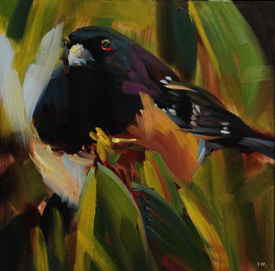 """Tantrum Towhee"" original fine art by Patti McNutt"