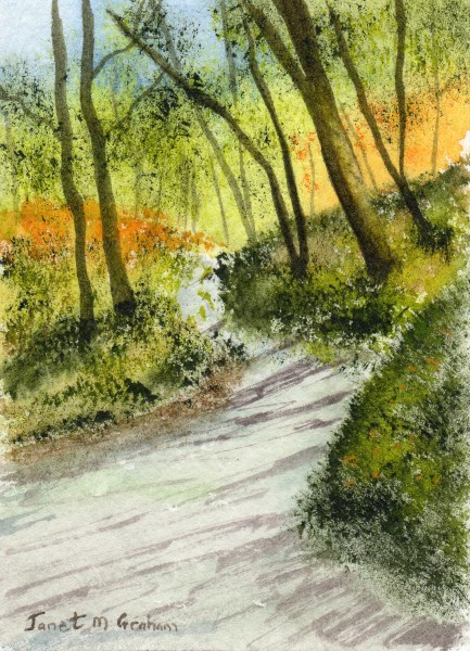 """Forest Road ACEO"" original fine art by Janet Graham"