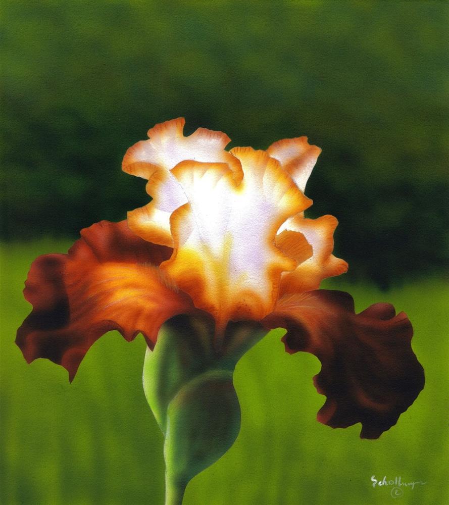 """Spring Beauty"" original fine art by Fred Schollmeyer"